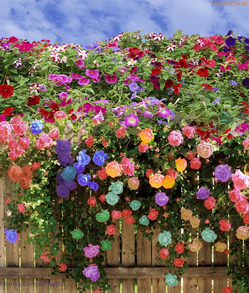 Jardim de Flores